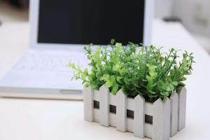 办公桌摆放哪些植物招财,办公桌植物摆放要注意什么?