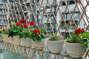 阳台摆放哪些植物风水好?阳台植物摆放禁忌