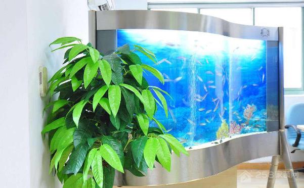 鱼缸摆放有什么风水?风水禁忌是什么?